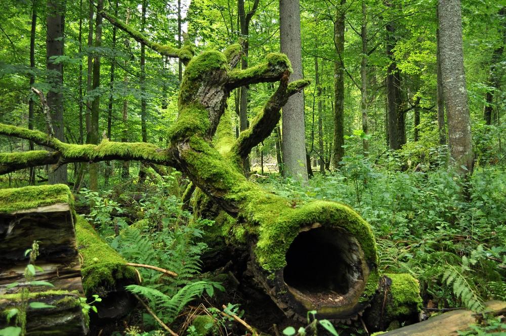 Bialowieza_National_Park_in_Poland0029