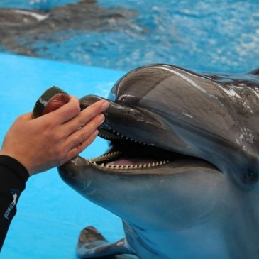 Дельфинарий «Немо» Коблево (фото,видео)