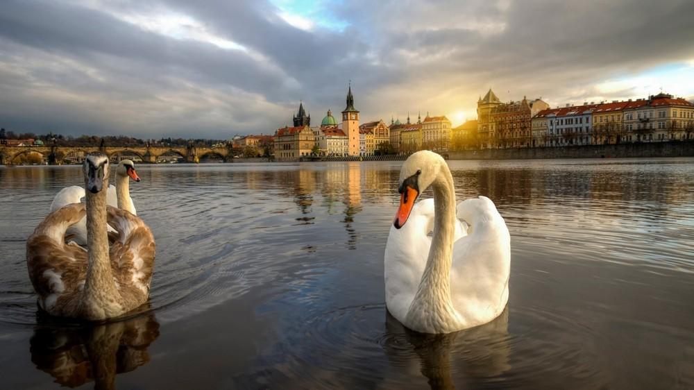 Прага14